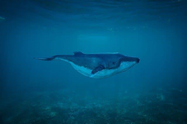 Santa Catarina Observacion de ballenas
