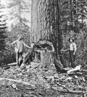 002-Logging-large