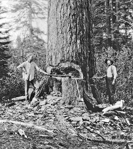 002-Logging-large