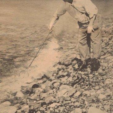Using long-handled dipper keeps Niemi's feet dry when he spots a submerged specimen.