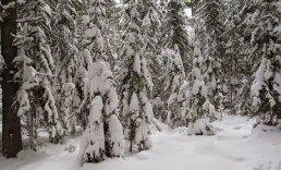 Winter-005-big