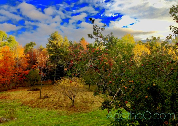 Colorful apple trees in landscape photography art print and greeting card by AgathaO
