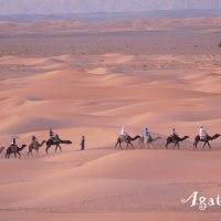 Dans le désert du Sahara au Maroc