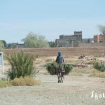 -Ouarzazate Region-Scene de vie Ane monté