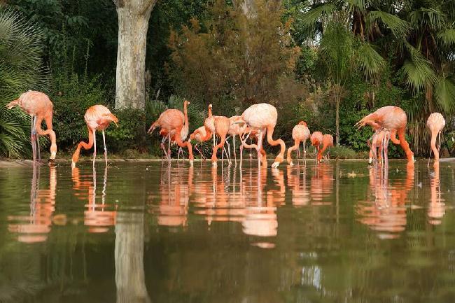 نتيجة بحث الصور عن حديقة حيوان برشلونة