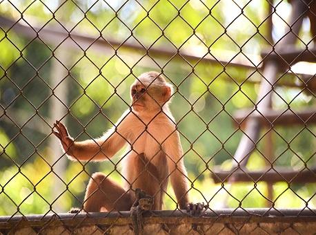 140720-parque-chico-mendes-fechado-pandemia-cuidados-animais