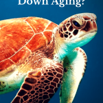 How Can You Slow Down Aging?