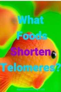 Gold fish on a green background What Foods Shorten Telomeres?