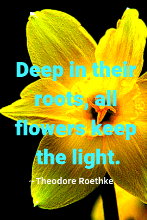 flower quotes to help you see love and beauty in life ageless