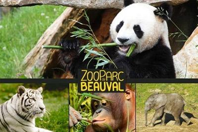 Zooparc De Beauval Agence De Voyages Vannes