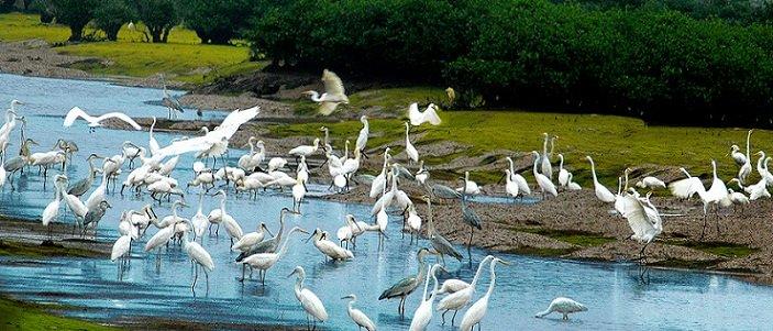 Decouverte le Parc national Xuân Thuy Nam Dinh