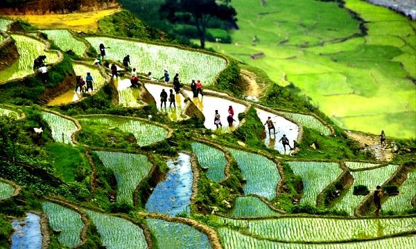 Circuits trekking Sapa randonnee villages Sapa
