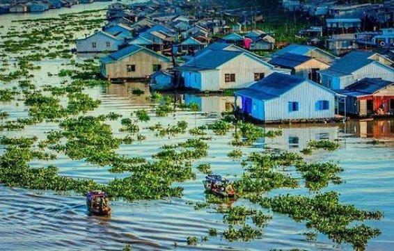 Forêt de cajeputiers de Tra Su au Delta du Mekong
