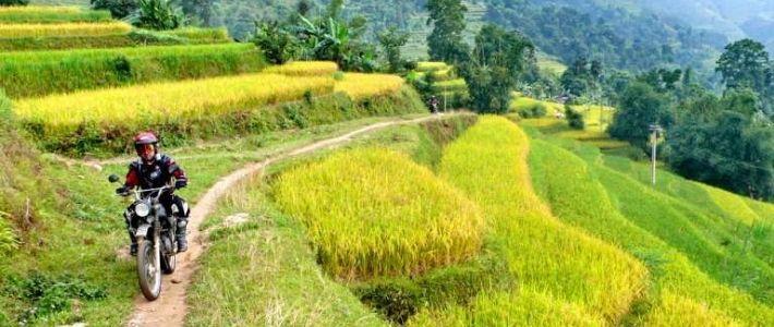 voyage à moto pour voir les rizières en terrasse à Sapa