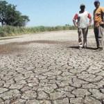 Córdoba, Corrientes y Chaco declararon la emergencia agropecuaria, los productores afectados podrán gozar de los beneficios de ley