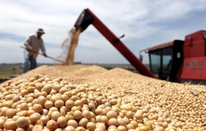 Estiman que habrá exportaciones récord de harina y aceite de soja por US$ 20.000 millones