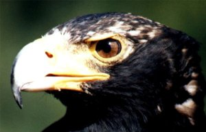 Things to do Cape Town Eagle Encounters