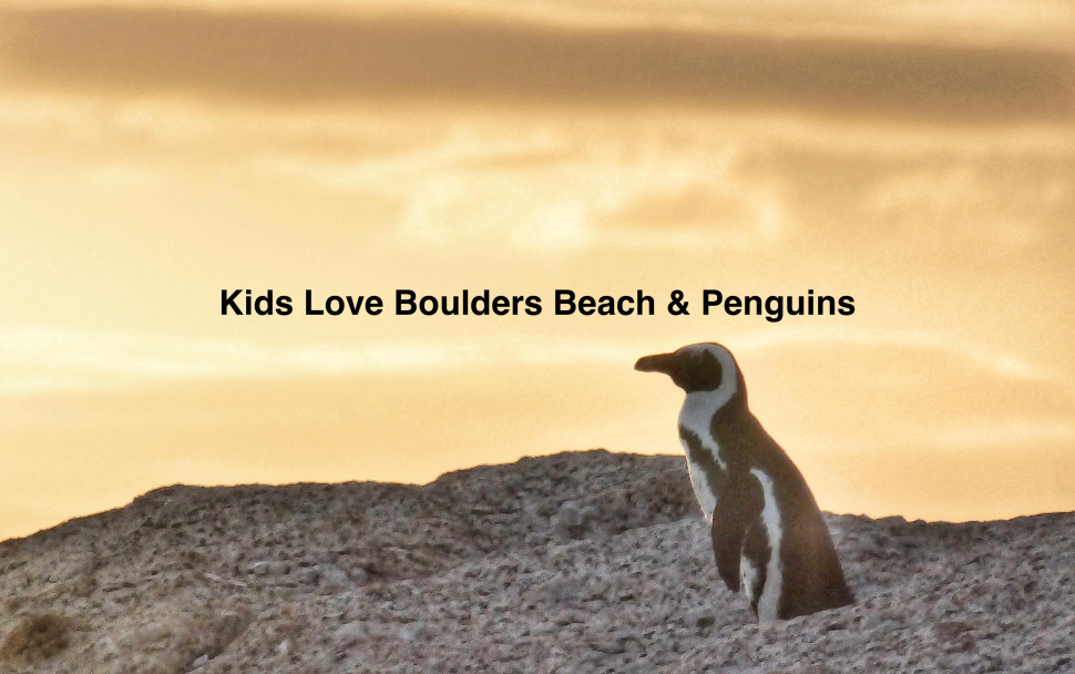 Kids Things To Do Boulders Beach Penguin Colony in Simonstown