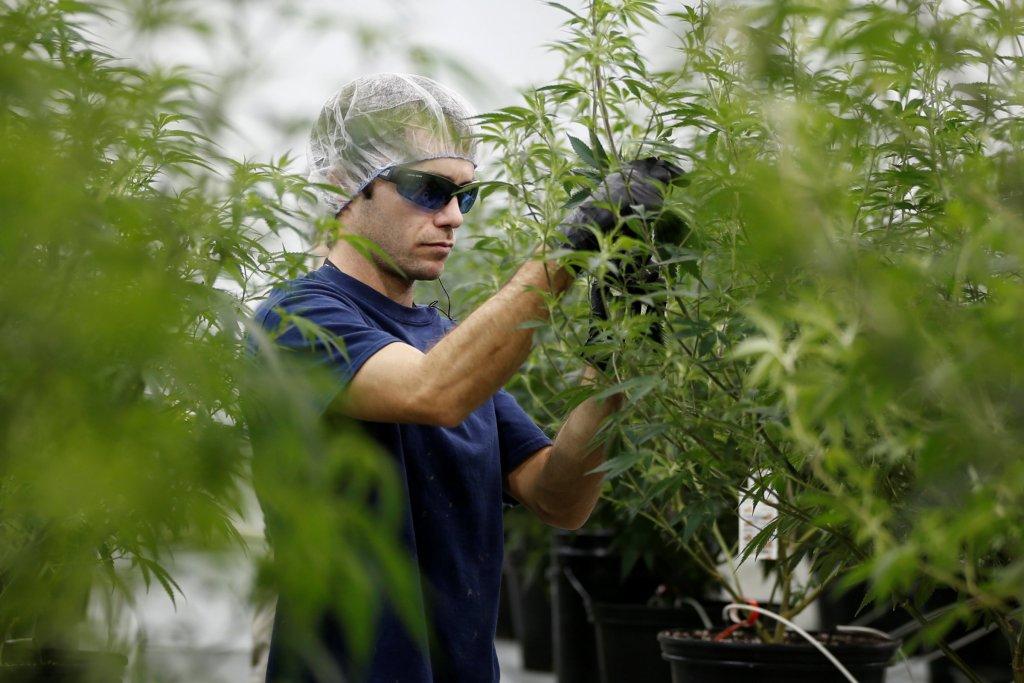 Sigue creciendo el gigante de la marihuana, compra a su rival por tres mil 400 MDD