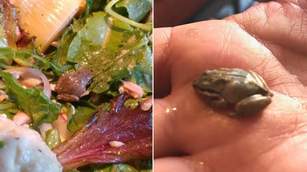 Compraron una ensalada demasiado orgánica…. encontraron una rana viva (Video)