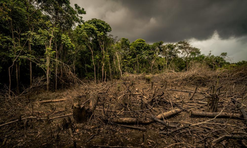 Sí arde el Amazonas. Pero.. ¿Qué hacemos? Aquí te decimos que hacer para ayudar