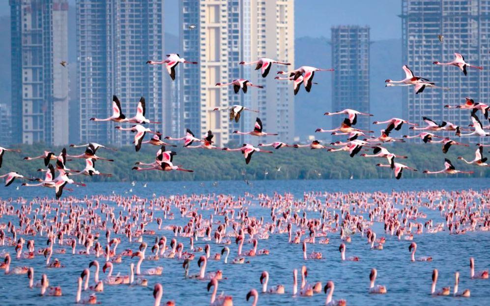 ¡Mar rosa! Miles de flamencos invaden las playas y las pintan de rosa
