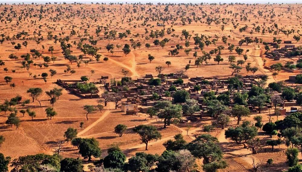 ¡Increíble! Hallan millones de árboles en el desierto del Sahara