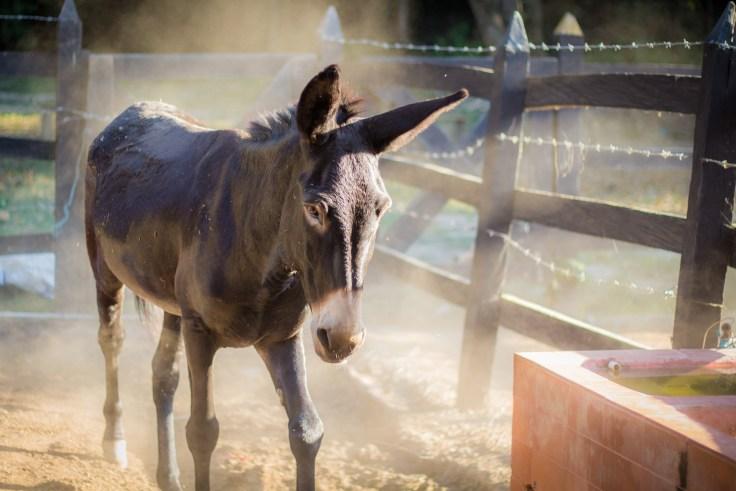 donkey-1521175_1920