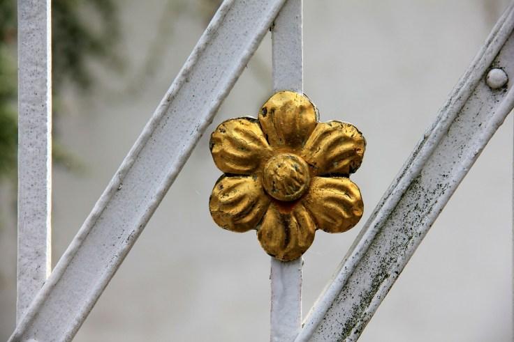 flower-188442_1920