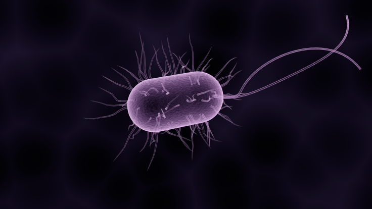 bacteria-1832824_1280.png
