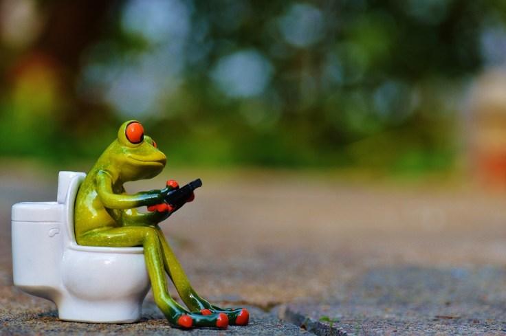 frog-914520_1920.jpg