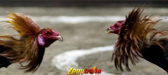 Situs Judi S128 Sabung Ayam Online Uang Asli