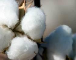 quality cotton
