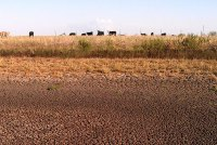 pasture_dry_cracked_soil_drought_texas_agrilife_facebook