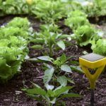 Edyn Raises $2m Seed Round from Strategic Investors for Precision Ag Hardware Rollout