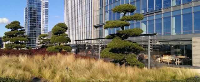 Green Roof Company, LiveRoof China, Inc., Looks East