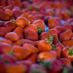 Farmstr, an Online Marketplace for Local Produce, Raises $1.3M