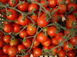 California Organic Farm Raises Capital With Direct Public Offering