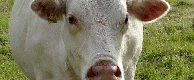Farmeron, Cattle SaaS Platform, Closes $2.65M Seed Round