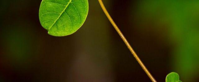 Green & Grow Secures $6M Series B