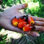 Fixing Palm Oil's Other Climate Threat