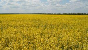 Kaiima Raises $65 Million, Aiming for Food Sustainability