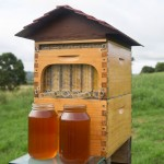 Crowdfunding campaign raised $2M in 24 hours for Honey on Tap