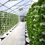 Six Mega-Trends in Indoor Agriculture
