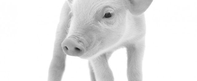 Prevtec Microbia vaccine swine