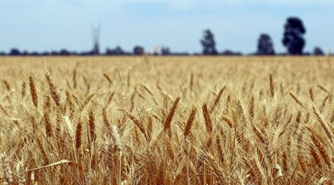 Punching Above Your Wheat: How Israel Became a Hub for Agtech Startups