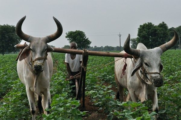 Aspada Invests $3.3M in Indian Farming-as-a-Service (FAAS) Provider EM3 AgriServices - AgFunderNews