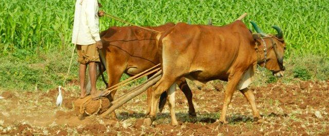India's First AgTech Accelerator Selects 8 Start-ups for Programme