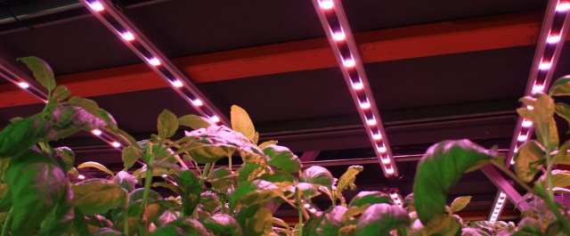 How Illumitex is Helping Controlled Environment Ag Growers Recoup Their Infrastructure Costs
