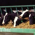2 Ways Cargill is Supporting Innovation and Sustainability in Livestock Production